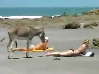 Donkey at the beach (funny)